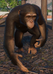 Chimpanzee, Western (Planet Zoo)