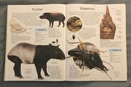 DK Encyclopedia Of Animals (158)
