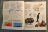 Macmillan Animal Encyclopedia for Children (1)