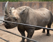 Cheyenne Mountain Zoo Rhinoceros