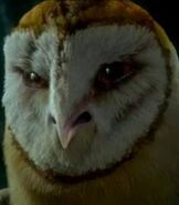 Kludd in Legend of The Guardians: The Owls of Ga'hoole