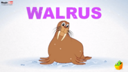 MagicBox Walrus