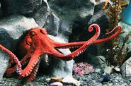 Northern-pacific-giant-octopus-facts-for-kids