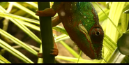 Tennessee Aquarium Chameleon