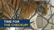 Wildlife World Zoo and Aquarium Tiger