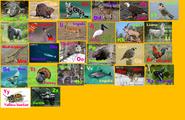 Animal Alphabet 8