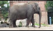 Audubon Zoo Elephant