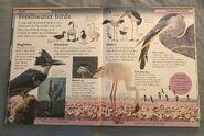 DK First Animal Encyclopedia (29)