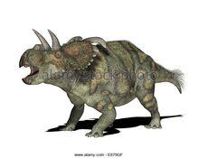 Dinosaurier-albertaceratops-dinosaur-albertaceratops-e679gf.jpg