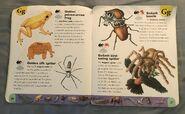 Extreme Animals Dictionary (10)
