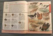 Fantastic World of Animals (6)