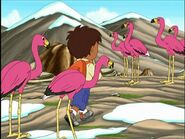 GDG Flamingos