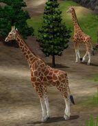 Giraffe-wildlife-park-2