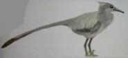 Heron Troodont