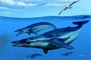 In this reconstruction the two main whales in the center are Coronodon havensteini the lower two in the background are Echovenator sandersi and the birds in the sky are Pelagornis sandersi CREDIT Alberto Genn