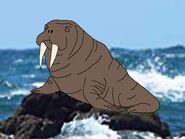 Rileys Adventures Pacific Walrus