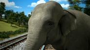 TTTE Elephant