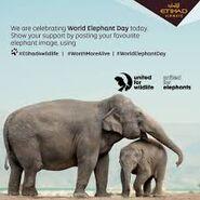 United for Wildlife Elephants