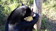 Virginia Zoo Sun Bear