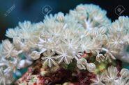 72873606-white-pulse-coral