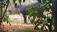 Brevard Zoo Tapir