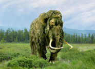 Mammoth, Woolly
