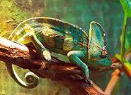 Noah's Ark Chameleons Geckos Vipers Pythons