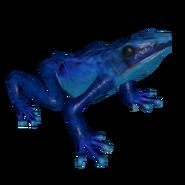 Poison Dart Frog GH
