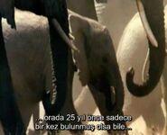 WWCM Elephants