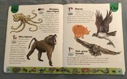 Deadly Creatures Dictionary (16)