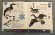 Polar Animals Dictionary (2)