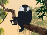 Rileys Adventures Black Crested Gibbon