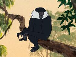 Rileys Adventures Black Crested Gibbon.jpg
