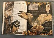 Birds (Eye Wonder) (6)