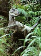 Bush raptor