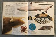 DK Encyclopedia Of Animals (29)