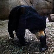 El Paso Zoo Sun Bear