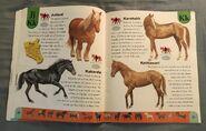 Horse Dictionary (12)