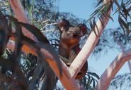 Koala-planet-zoo