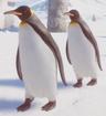 Penguin, King (Planet Zoo)
