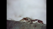 WAET Insect