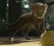 Bronyx Zoo TV Series Cheetah