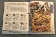 Fantastic World of Animals (81)