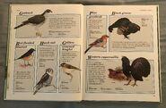 Macmillan Animal Encyclopedia for Children (7)