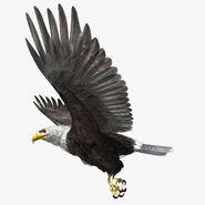 Model Bald Eagle