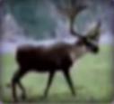 Reindeer-disneythinkfast