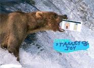 Stanley and joy meet a bear