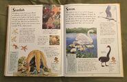 The Kingfisher First Animal Encyclopedia (68)