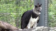 Zoo Miami Harpy Eagle