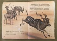 Awesome Animals (Road to Reading) (10)